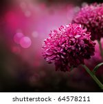 Stock photo dahlia autumn flower design with copy space 64578211