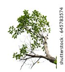 tree branch isolated | Shutterstock . vector #645783574
