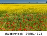 Field Of Red Wild Poppies On A...