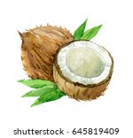 coconut with leaves isolated on ... | Shutterstock . vector #645819409