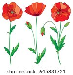 vector set with outline red... | Shutterstock .eps vector #645831721