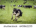 happy cow jumping down a green...   Shutterstock . vector #645862255