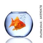 Golden Fish Carassius Auratus...