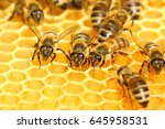Honey Bees On  Honeycomb