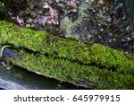 Mossy Log  High View  Ii