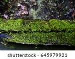 Mossy Log  High View