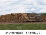 huge stacks of logs ready to be ... | Shutterstock . vector #64598173