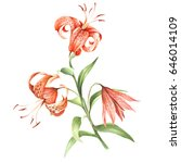 Image Tiger Lily Flowers. Hand...