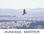 one bird is flying above the... | Shutterstock . vector #646070539