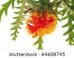 image of gold flower on white... | Shutterstock . vector #64608745