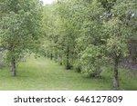 city of aveiro | Shutterstock . vector #646127809