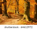 Beech Forest With Trail