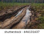 Muddy Forest Path