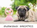 funny pug dog playing with pink ... | Shutterstock . vector #646147411