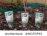 three australian dollars... | Shutterstock . vector #646151941