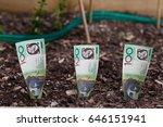 three australian dollars... | Shutterstock . vector #646151941