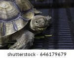 help the injured tortoise keep... | Shutterstock . vector #646179679