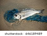 Dead Fish Lying On The Shore...