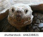Galapagos Tortoise Face