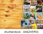 man in farming and agriculture  ... | Shutterstock . vector #646245901