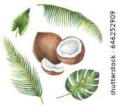 watercolor organic set of... | Shutterstock . vector #646252909
