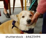 pet therapy series beautiful