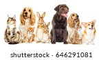 Stock photo dog and kitten on a white background 646291081