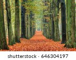 Beautiful Lane In Autumn In Th...
