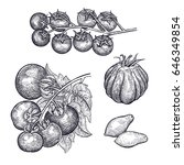 tomatoes set. hand drawing of... | Shutterstock .eps vector #646349854