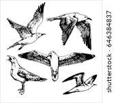 set of contour sea bird  hand... | Shutterstock .eps vector #646384837