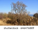 landscape with trees  dry herbs ... | Shutterstock . vector #646476889