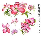 wildflower dogwood flower in a... | Shutterstock . vector #646478779