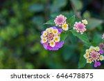 garden in barcelona  spain | Shutterstock . vector #646478875