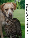 dog and a cat nuzzling each... | Shutterstock . vector #646537804