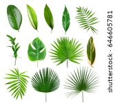 different tropical leaves on... | Shutterstock . vector #646605781