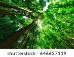 man made forest   Shutterstock . vector #646637119
