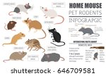 mice breeds icon set flat style ... | Shutterstock .eps vector #646709581