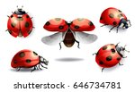 Set Of Red Ladybug Isolated On...