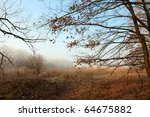 bare forest in late autumn | Shutterstock . vector #64675882