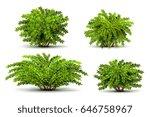 shrubbery  3d isometric bushes... | Shutterstock .eps vector #646758967