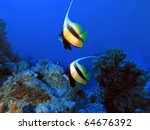 Underwater life, Red sea and two bannerfish from Nemo cartoon movie in blue background of deep water - stock photo