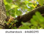 squirrel | Shutterstock . vector #64680295
