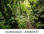 walking trail in new zealand... | Shutterstock . vector #64682437