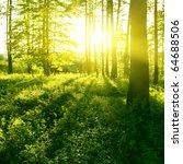 sunlight in the forest. | Shutterstock . vector #64688506