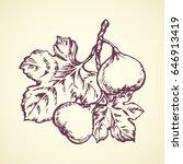 yummy fresh sappy ficus carica... | Shutterstock .eps vector #646913419