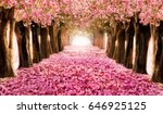 the romantic tunnel of pink... | Shutterstock . vector #646925125