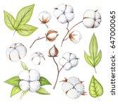 hand painted modern cotton... | Shutterstock . vector #647000065