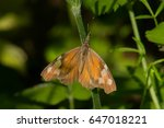 Small photo of American Snout Butterfly perched on a stem.
