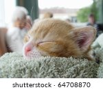 Pet Therapy Series. Tiny Ginge...