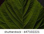 structure dark green leaf.... | Shutterstock . vector #647102221